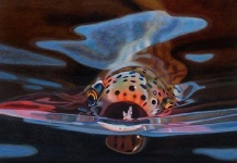 Interesting Fly-fishing Picture shared by Casey Jacoby – Fly dreamers