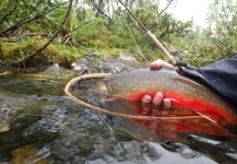 Fly-fishing Photo of Arctic Char shared by Anders Olsson – Fly dreamers