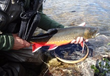 Fly-fishing Picture of Arctic Char shared by Anders Olsson – Fly dreamers