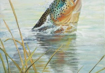 Brown trout Fly-fishing Art – ROBERT CORSETTI - Artist  shared this Great Image in Fly dreamers