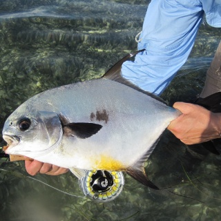 Isn't this a pretty Permit picture! - Mango Creek Lodge