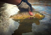 Jessica Strickland 's Fly-fishing Catch of a European brown trout – Fly dreamers