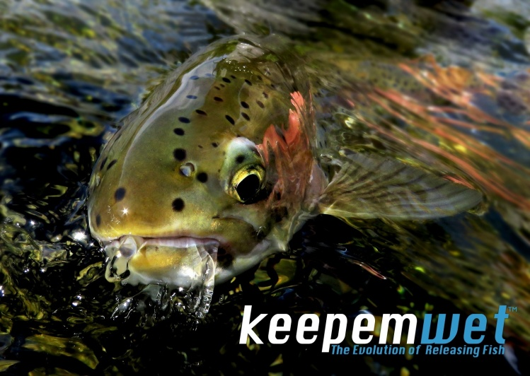 Wet fish just look better! #keepemwet