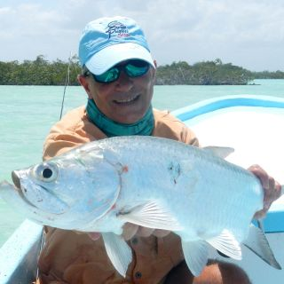 Tarpon and Snook are plentifull - Punta Allen fishing club
