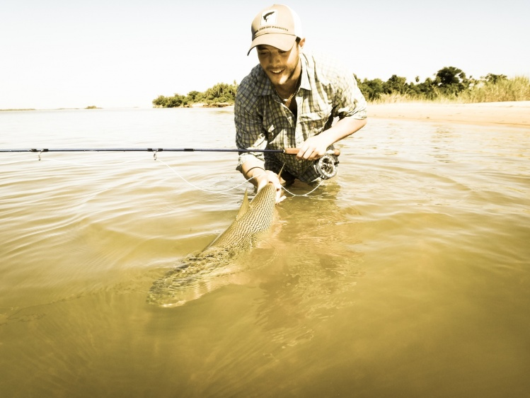 Golden Fly Fishing the flats !  C & R goldenflyfishing.com